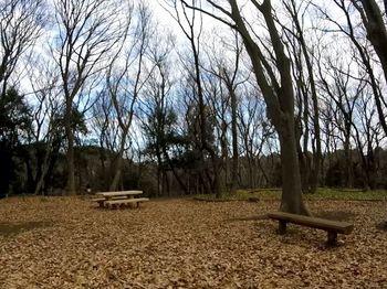 東高根森林公園3.jpg